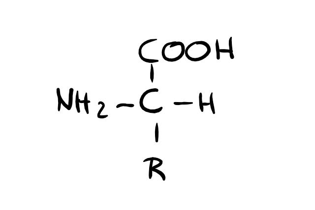 Aminosäure