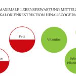 Kalorienrestriktion